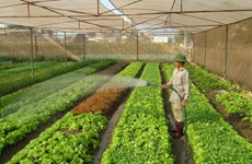 河内市加大对农业领域的招商引资