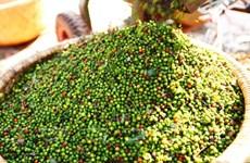 今年前4月胡椒出口量增加但出口额下降