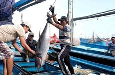 中国所颁发的休渔令对越南毫无价值