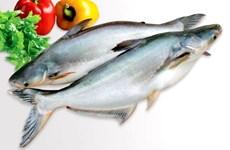 越南查鱼迎来突飞猛进的机遇:出口恢复正常