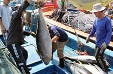 越南金枪鱼出口企业应着力开发国内市场