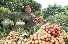 越南与中国继续加强农产品贸易交往