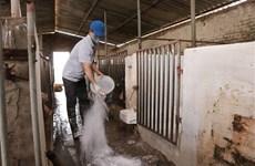 越南20个省市再次爆发非洲猪瘟疫情