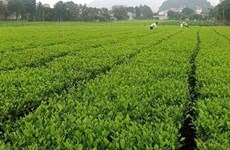 推动农场经济可持续发展