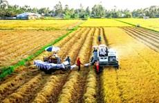 大米出口大幅增长 价格创多年来新高水平