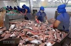 越南查鱼出口额下降39%