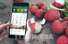 """通过Momo电子钱包平台上的""""加大越南农产品力度""""正式启动"""