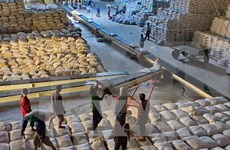 越南中标向菲律宾出售6万吨大米