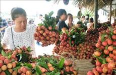 EVFTA协定:提高越南农产品的增值链