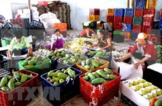 2020年上半年越南蔬果出口额达到15亿美元