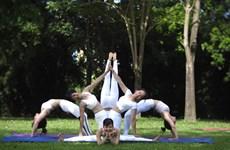 全国瑜伽节将在清化省举行