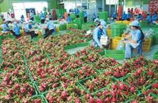 """中国辽宁港集团新开""""大连—越南""""航线:越南蔬果加大对中国出口的良机"""