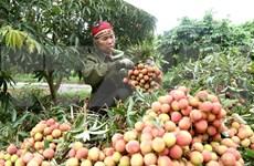 将越南农产品与食品深入进军中国市场