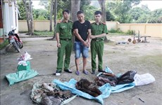 乂安省警察查获一起非法跨境运输大量濒危动物案件