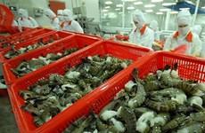 虾类价格将于第三季度回升