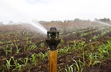 越南水稻可采取以色列滴灌技术模式