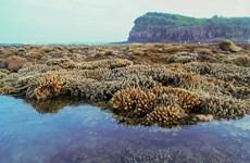 """越南旅游:独特的燕礁——""""地上水宫"""""""