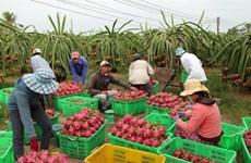 实现市场多样化   越南水果出口的可持续发展方向