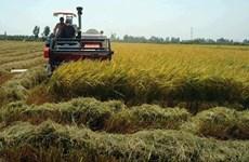 越南自7月1日起开展2020年中期农业调查