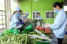 柬埔寨仍未发布任何关于禁止进口越南蔬果的通知