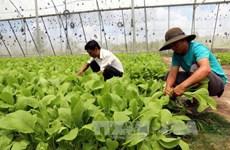柬埔寨将与日本企业签署蔬菜合作,投资与发展谅解备忘录