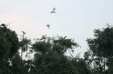 北宁省重视东川鹭鸶园生物多样性保护工作