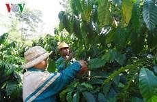 公私合作为得乐省咖啡可持续生产带来多种效益