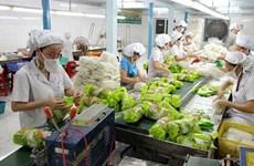"""越南蔬果对""""荷刻""""市场的出口增长良好"""