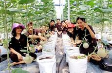 胡志明市开发7个农业和生态旅游计划