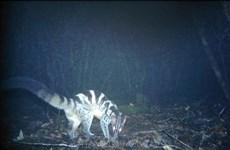 林同省婆山比杜普国家公园发现多种稀有动物