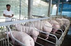 国家非洲猪瘟疫情预防工作计划获批