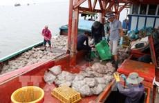 解除黄牌警告:越南渔船船位监测设备安装率超过77%