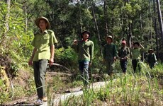 宁顺省推广森林保护与可持续发展民生相结合的模式