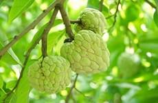 永福省致力提高农产品的竞争力