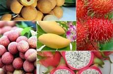 越南农产品出口连续迎来喜讯