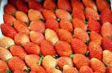 林同省公安查获正在运往大叻市销售的8.3吨来历不明草莓