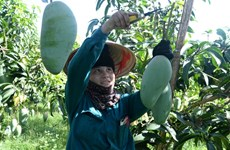 山罗省加强农产品出口