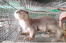 越南政府总理下令停止进口野生动物