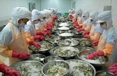 树立起越南虾类品牌形象