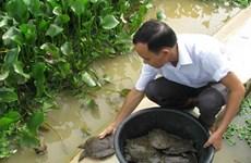 甲鱼养殖模式铺平农民致富之路