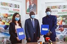 越南T&T集团向科特迪瓦订购15万吨腰果 创该国腰果出口新纪录