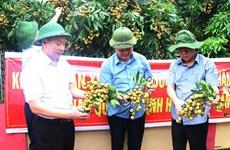 海阳省2020年首批龙眼出口澳大利亚和新加坡