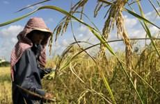 2020年农业为柬埔寨国内生产总值贡献32%