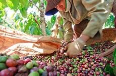 越南农产品颇受阿尔及利亚消费者的青睐