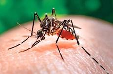 隆安省加强基孔肯雅热、登革热和寨卡等传染性疾病
