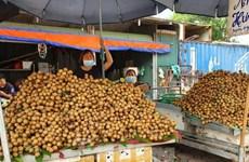 检疫工作被停止   越南农产品出口困难重重
