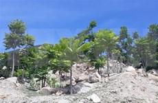 宁顺省多措并举 扎实做好护林工作力争2020年森林覆盖率达47%