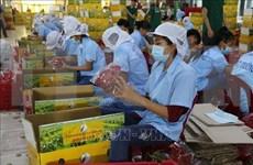 美国水果出口检疫专家将于9月2日抵达越南进行水果检疫