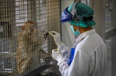 泰国新冠疫苗在小鼠和猴子身上实验取得成功印尼拟免费向民众提供新冠疫苗