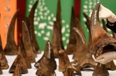 越南有史以来最大犀牛角非法交易案遭起诉